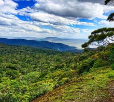 """Mount Lewis National Park Queensland Sera (@sera_loves_crocs) on Instagram: """"Once upon a time there was a mountain that rose out of a vast green forest. ~ Phish #mountlewis…"""""""