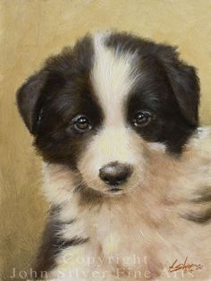 BORDER COLLIE PUPPY PORTRAIT ** ORIGINAL OIL PAINTING by JOHN SILVER! #Realism