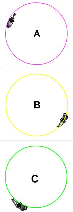 Riding the circle properly. TheDigitalHorse - Dressage Tests Online