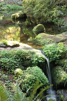 a small pond with a waterfall