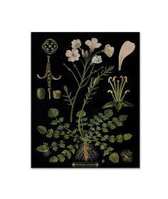 Hey, I found this really awesome Etsy listing at https://www.etsy.com/listing/246189830/botanical-print-botanical-art