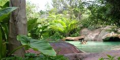 Coromandel: The Lost Spring Thermal Pools - Whitianga, New Zealand. New Zealand North, New Zealand Travel, Menorca, Wonderful Places, Beautiful Places, New Zealand Image, New Zealand Holidays, Thermal Pool, Adventure Is Out There