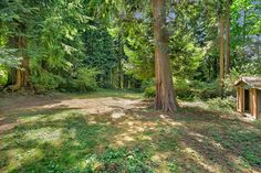 Large private backyard w/tree house, shed w/lean-to to store wood!