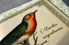 American robin journal songbird vintage style by GuBoArtBook,