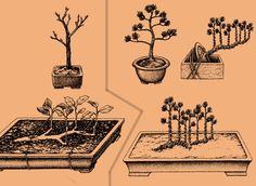 Tworzenie bonsai w stylu Ikadabuki