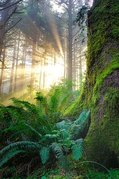 Sunrise in the forest Beautiful World, Beautiful Places, Beautiful Pictures, Foto Picture, Walk In The Woods, Tree Forest, Forest Light, Nature Pictures, Amazing Nature