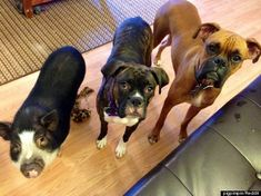 12 Animals That Totally Believe They Are Dogs