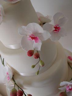 http://pds.exblog.jp/pds/1/201104/25/90/a0200390_8313232.jpg