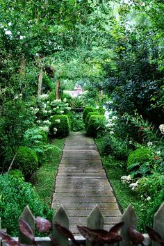 Lovely jungle garden