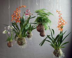 Name: string garden kokedama String Garden, Garden Art, Garden Plants, House Plants, Garden Design, Garden Ideas, Shade Garden, Ikebana, Air Plants