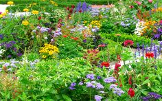 Creating stunning borders is the highlight of having a garden. Seeing them in full bloom is what makes the hours of