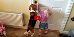 This Toddler and Beagle Are the World's Cutest Partners in Crime