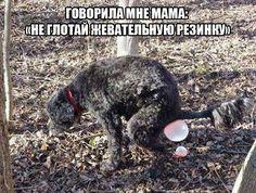 #прикол #собаки #хохма #шутка #юмор
