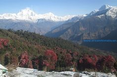 Ghorepani Poon hill trek offers you incredible mountain landscapes that will abandon you confused.