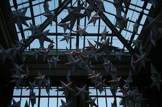 Conservatory stars by DianthusMoon, via Flickr