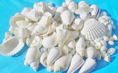 Wedding Seashells / Wedding Decorations / by SeasideImpressions, $20.00