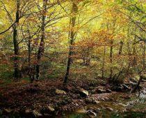 Reserva Natural Integral de Muniellos, en Cangas del Narcea, Asturias.