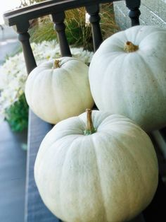 White pumpkins are becoming more popular and add an air of elegance to indoor or outdoor decor. Leave them as is, or decorate with paint or gilding for a more formal look.