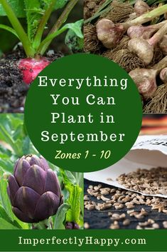 Everything You Can Plant in September for Zone 1 2 3 4 5 6 7 8 9 and 10 in your backyard vegetable garden and homestead. Vegetable Garden Planner, Backyard Vegetable Gardens, Garden Landscaping, Landscaping Ideas, Organic Vegetables, Growing Vegetables, Organic Fruit, Growing Tomatoes, Fall Planting Vegetables