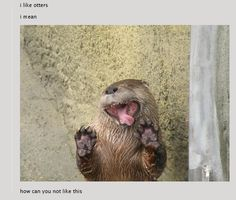 Like this post if you like otters!!