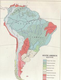 South American vegetation.