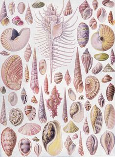Ernst Haeckel Más