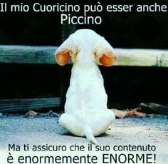Amore lo so che hai un cuore pieno pieno d'amore ❤❤❤❤❤ Cute Cats And Dogs, Animals And Pets, Funny Animals, Cute Animals, Love Pet, I Love Dogs, Animals Beautiful, Best Dogs, Animal Pictures