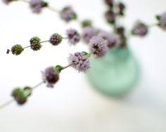 Flower Photography, pale purple, photograph, vintage glass, lavendar, lilac, aqua blue, white, home decor, wildflowers. $30.00, via Etsy.