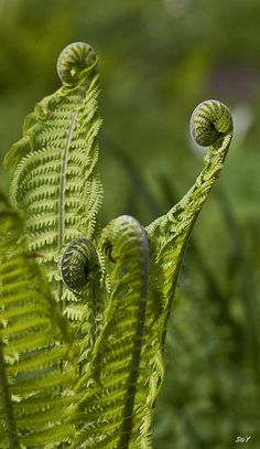 the universe is unfolding as it should Patterns In Nature, Textures Patterns, Green Plants, Cactus Plants, Planta Vascular, Trees To Plant, Plant Leaves, Fern Frond, Unusual Plants