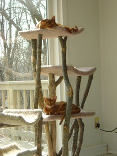 I love these cat trees, something that looks nice out in the open, unlike those cheesy ones in pet stores.