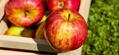 Apples are in season, so skip the farmers market and go pick them yourself! No car? No problem! Use public transportation to get you and the family to these top spots around the Hudson Valley!
