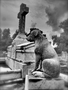 Dog waiting for his master. Catholic Cemetery, Savannah, GA. Photo by Dick Bjornseth