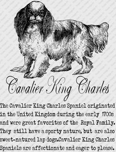 CAVALIER KING CHARLES Spaniel Download Instant Digital Vintage Art with Description Printable Frame Cards Fabric Transfer Iron On by RosiesVintageArtShop on Etsy