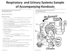 Human Body PowerPoint and Lessons: Respiratory & Excretory