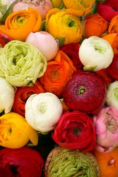 ranunculus...how can someone pick one fav flower,I love these and Peonies and hydrangeas....okay I love flowers