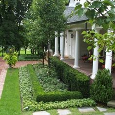 I like the idea of the ground cover growing in front of the hedge as a transition.