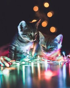 100 Photos Proving That Cats Are The Cutest Animal On Earth - Einrichten und Wohnen Cute Cats And Kittens, I Love Cats, Crazy Cats, Cool Cats, Kittens Cutest, Pretty Cats, Beautiful Cats, Animals Beautiful, Cute Funny Animals