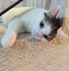 Siempre hermosa #lola #hermosa #animallover #adorable #amigo #gatitolindo #ilovemycat #instalike #instapic #instamoments #love #kitty #lovecats #cat #catsoninstagram #cats_of_instagram #catoftheday #catstagram