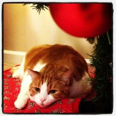 Tom - our #Udemy Mascot - is Waiting for Christmas under the tree!