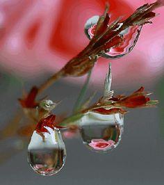 Beautiful effect with dew drops on flowers. Dew Drops, Rain Drops, Amazing Photography, Nature Photography, Levitation Photography, Exposure Photography, Winter Photography, Abstract Photography, Beach Photography