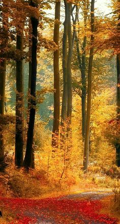 Beautiful This reminds me of my driveway to my beloved home in them Ozark hills of Northwest Arkansas