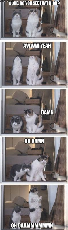 51 super ideas for funny cute cats hilarious animal pictures Cute Funny Animals, Funny Cute, Funny Shit, Super Funny, Funny Stuff, Humor Animal, Animal Memes, Cute Kittens, Cats And Kittens