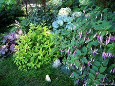 One of my shady garden corners, all perennials, Heuchera, Brunnera, fuchsias, Astilbe, Hydrangea, ferns