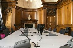Gladstone arrived a couple of weeks ago but was confined to just a few rooms before he is fitted with a tracker and let further afield to fulfill his job of solving the Treasury's chronic cat problem