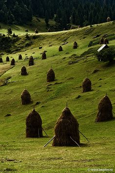 Haystacks, Romania. Previous Pinner Said: I think those are the tidiest haystacks and fields I've ever seen.