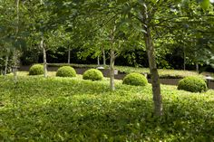 trees in a hedge and shaped box