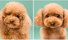 7 Doggy Before-And-Afters That Will Make Your Heart Squirm