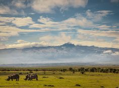 With Mount Kenya in the distance, a crash of rhinos graze in the Ol Pejeta Conservancy.