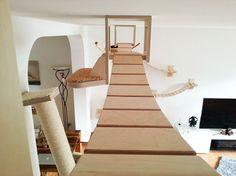 cat-playground-room-goldtatze-2.jpg (915×686)