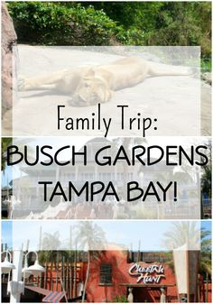 Family Trip: Busch Gardens Tampa Bay - This Spring Break we packed up the car and drove to Tampa Bay to experience Busch Gardens - such a great family trip! It's a combination amusement park, animal habitat, shows and more! Click through to read about our awesome time!